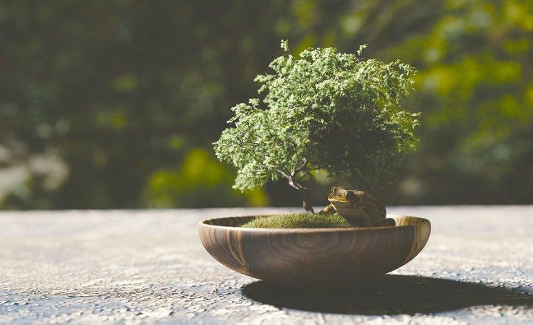 La scelta del vaso per bonsai - La Rivista della Natura