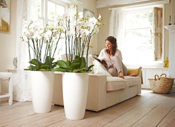 Risultati immagini per vaso di vetro con molte orchidee | Arredare