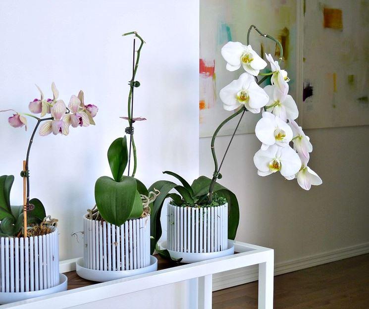 Vasi per orchidee - Orchidee - Vasi per orchidee caratteristiche