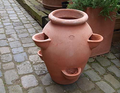 Vaso per erbe aromatiche/fragole padella resistente al gelo in