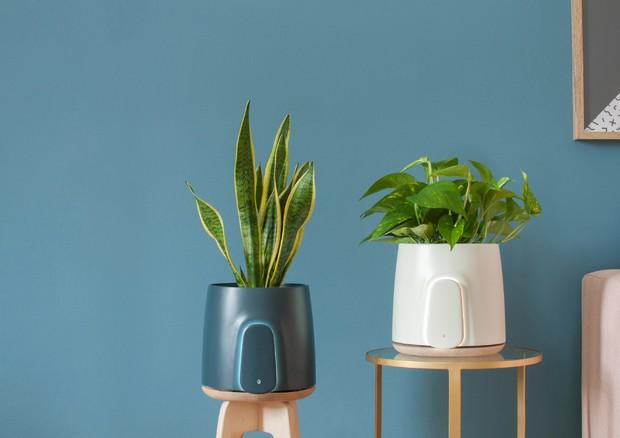 Il vaso 'smart' conquista il mercato con 1 milione di dollari