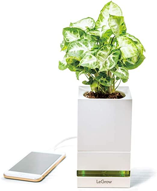 LeGrow Smart Garden- Vaso Intelligente - Coltivazione Indoor